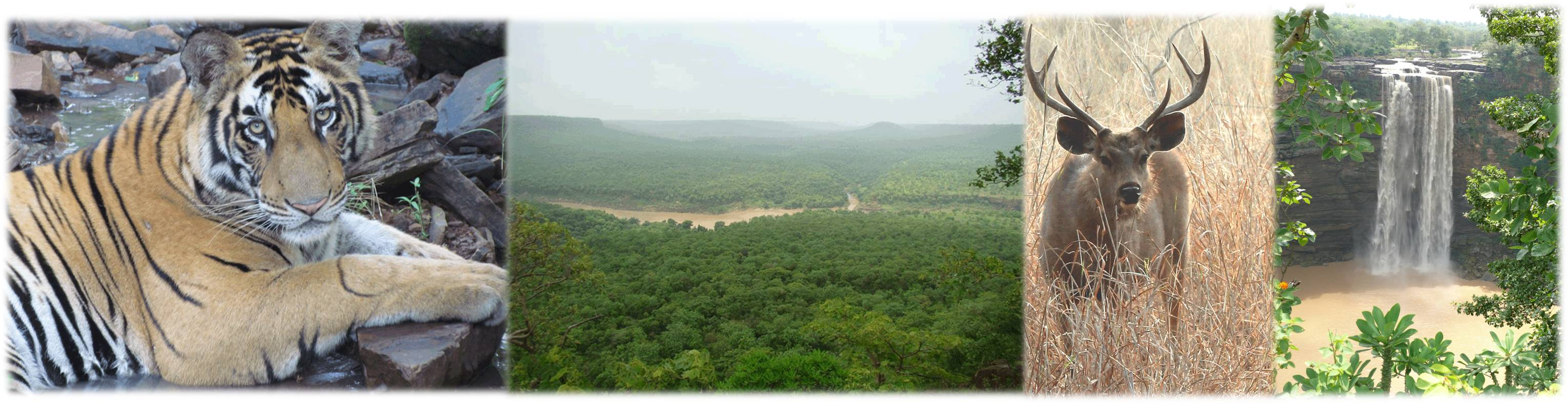 best tiger reserve india